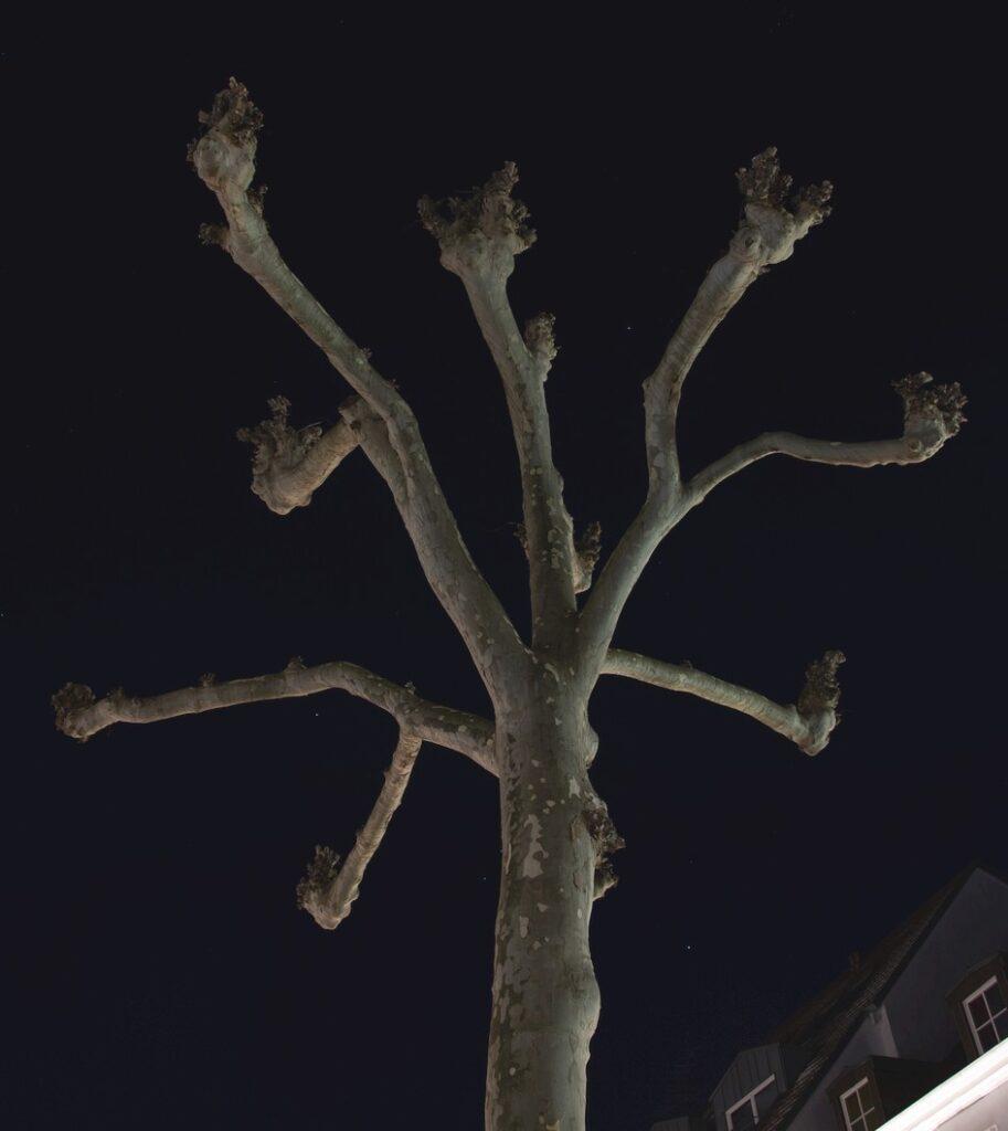 Baum auf dem Sankt Johanner Markt im Dunkeln (Rudolf)